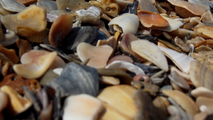 Lots of shells on the beach...